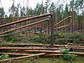 После урагана - panoramio (5).jpg
