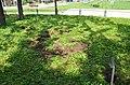 Припремање земљишта за формирање благотинске неолитске пећи.jpg