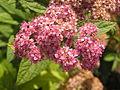 Растения в Седово 027.JPG