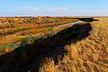 Река Илек - panoramio (7).jpg