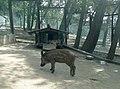 Сафари-парк. Необычные соседи - panoramio.jpg
