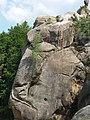 Скельно-печерний комплекс - береза на скелі.jpg
