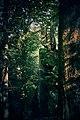 Скелі Довбуша влітку.jpg