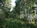 Старый Сибирский тракт - panoramio (17).jpg