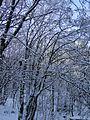 Съева Дупка - panoramio (14).jpg