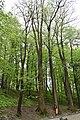 Трускавецький парк 3.jpg