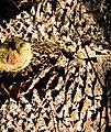 Фрагмент стовбура .06.jpg