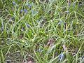 Цветы в саду Академии.jpg