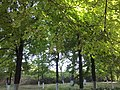 Чорноморський, м. Гола Пристань, вул. Лермонтова,1;Голопристанський район.jpg