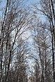 Ясная Поляна. Фото 37.jpg