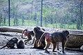 مجموعه عکس از رفتار میمون ها در باغ وحش تفلیس- گرجستان 06.jpg