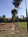 গ্রাম্য রাস্তার পাশে বৃক্ষের সারি.jpg