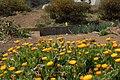 ちいさな花畑 - panoramio.jpg