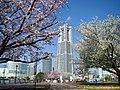 みなとみらいの春(Minato-Mirai in spring) 31 Mar, 2015 - panoramio.jpg