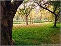 华南植物园 - panoramio (1).jpg