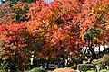 大窪寺の紅葉 - panoramio.jpg