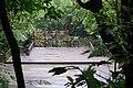 桐花公園 Aegiceras Park - panoramio.jpg
