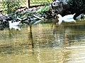 水域生態區 Water Plants Area - panoramio (2).jpg