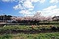 狛江市 野川・谷戸橋付近 201504020942 - panoramio (1).jpg