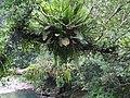 金瓜寮溪賞蕨步道 Jingualiao River Fern Trail - panoramio.jpg