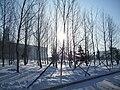 雪后的清晨 - panoramio.jpg