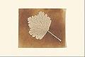 -Leaf- MET DP167358.jpg