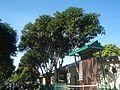 09471jfAlexis G. Santos National High School Liciada, Bustos Bulacanfvf 18.jpg