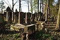 1492viki Cmentarz żydowski przy ul. Lotniczej. Foto Barbara Maliszewska.jpg