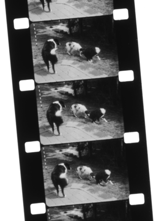 Film stock - A silent home movie on 16mm black-and-white reversal double perforation film stock
