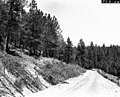 "1963. Ips oregoni. Ponderosa pine thinning slash from ""chipper-strip"" lying along roadside. This slash was subsequently run through a chipper. Near Calamity Butte, Burns Ranger District. Malheur National Forest. (38675329632).jpg"