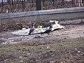 2005-2010. Птицы Донецка (C-740) 79.jpg