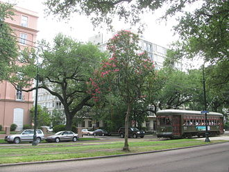 St. Charles Avenue - New Orleans streetcar on St. Charles Avenue in the Garden District with Mardi Gras beads on a tree in the foreground.