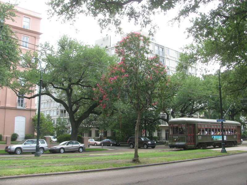 File:20080622 St. Charles St. Trolley behind tree with Mardi Gras beads.JPG