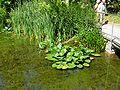 2008 07 Botanical Garden Meran 70130R0113.jpg