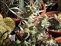 2010. Выставка цветов в Донецке на день города 30.jpg