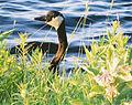 2012 Photo Contest - Wildlife Category (7944931506).jpg