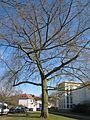 20130401Ostschule Saarbruecken2.jpg