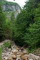 2014 07 Selva di Progno (VR) Italy - Giazza - Val Fraselle - ravin forest - Ctg Baldo Lessinia org photo Paolo Villa FOTO6791bis.JPG