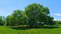2015.07.07.-18-Mulde Eilenburg--Bruch-Weide.jpg