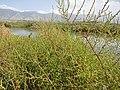 2015.09.05 13.06.37 DSC00322 - Flickr - andrey zharkikh.jpg