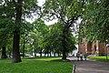 46-106-5003 Drohobych Park RB 18.jpg