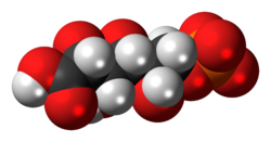 6-Phosphogluconic-acid-anion-3D-spacefill.png