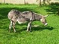 791 Donkey.jpg