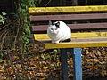A cat from Pyatigorsk 04.jpg