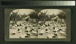 A chicken ranch in California (NYPL b11707294-G89F370 009F).tiff