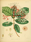 A hand-book to the flora of Ceylon (Plate LII) (6430650151).jpg