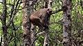 A monkey on tree.jpg