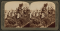 A rice raft, South Carolina, from Robert N. Dennis collection of stereoscopic views.png