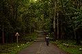 A road throughPeriyar Tiger Reserve.jpg