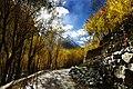 A street of Khaplu valley in autumn season.jpg